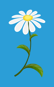 White Daisy Vector Illustration