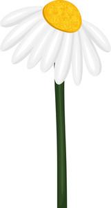 White Flower Twig