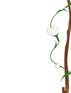 White Flowers Branch Frame Banner Design
