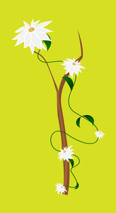 White Flowers Branch Vector