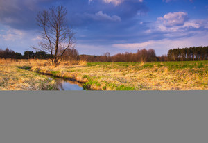 Wild beautiful polish river in rural landscape