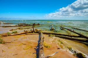Wild desert beach with fallen dead trees. Cape Kolka