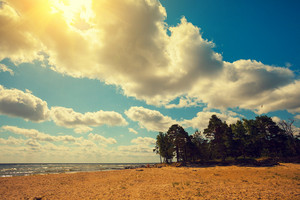 Wild desert beach with pine trees