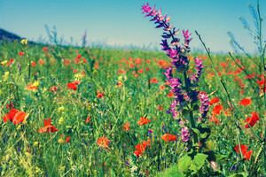 Wild flowers on the field