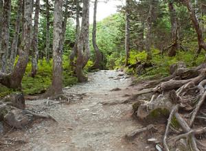 Wild Forest Trail