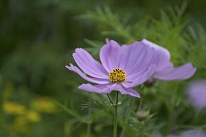 Wildflower Macro
