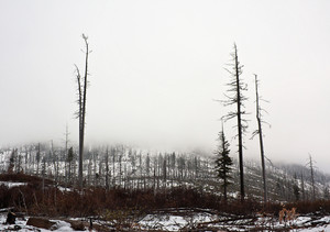 Winter Forest Burn