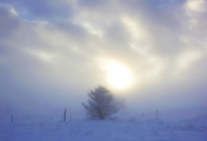 Winter Landscape 231