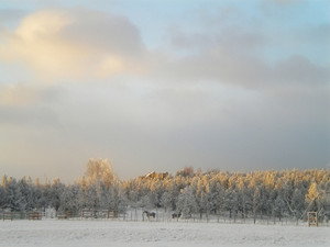 Winter Sunrise Horses