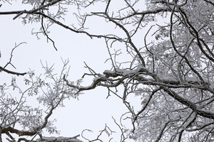 Winter - Tree Branches Background