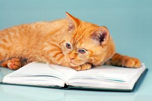 Wise cat