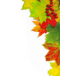 Com trajeto de grampeamento. Framework a partir do Outono Multicoloured Maple Leaves