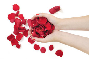 Woman hand holding rose petals