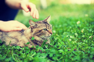 Woman pets cat lying in clover