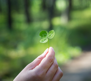 Woman\'s hand holding clover leaf with blurred forest background.
