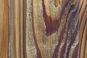 Wood Background 32