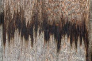Wood Background 35