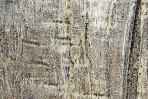 Wood Background 38