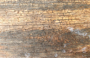 Wood Background Texture 42