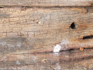 Wood Background Texture 43