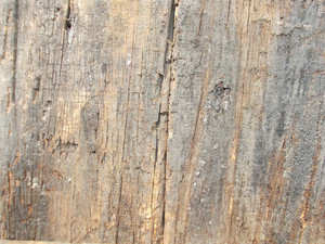 Wood Background Texture 45