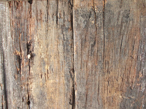 Wood Background Texture 47