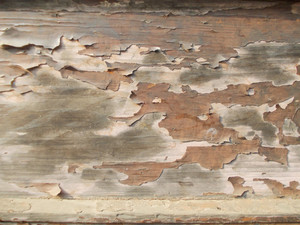 Wood Background Texture 48