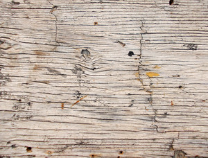 Wood Background Texture 55