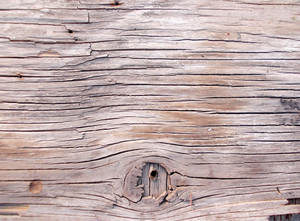 Wood Background Texture 59