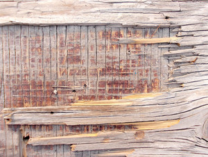 Wood Background Texture 64