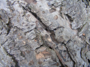 Wood Bark 1 Texture