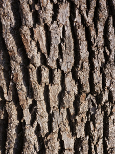 Wood Bark 14 Texture