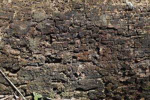 Wood Bark 19 Texture