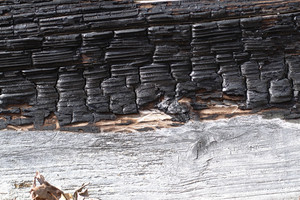 Wood Bark 20 Texture