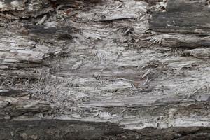 Wood Bark 22 Texture