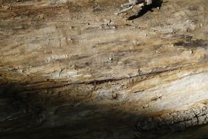 Wood Bark 27 Texture