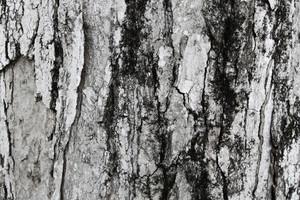 Wood Bark 3 Texture