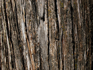 Wood Bark 30 Texture