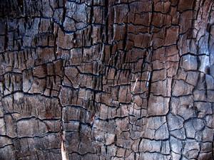 Wood Bark 35 Texture