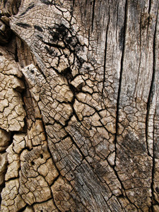Wood Bark 40 Texture