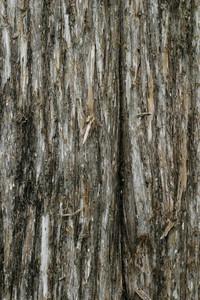 Wood Bark 42 Texture