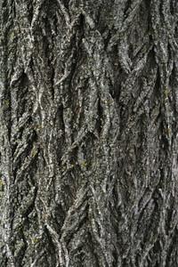 Wood Bark 44 Texture