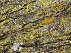 Wood Bark 45 Texture