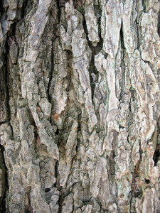 Wood Bark 5 Texture