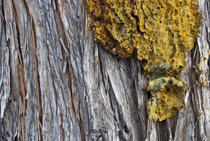 Wood Bark Texture 11