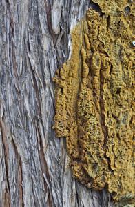 Wood Bark Texture 12