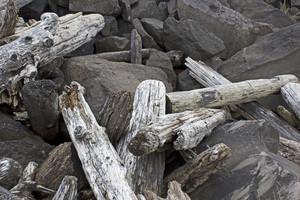Wood Bark Texture 17