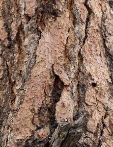 Wood Bark Texture 19