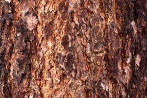 Wood Bark Texture 1
