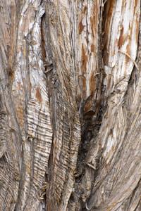 Wood Bark Texture 20